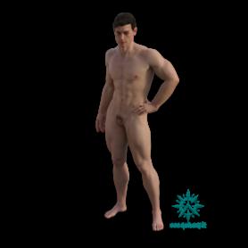 Erwachsener Menschen Mann muskulös stehend